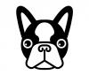 Ilustrație Terrier de Boston