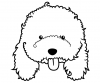 Ilustrație Pudel tip toy